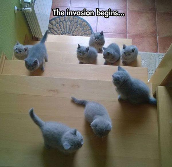 Cutest Invasion Ever - Cat humor