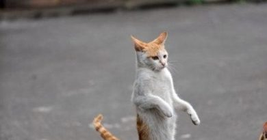 Invisible Pogo Stick - Cat humor