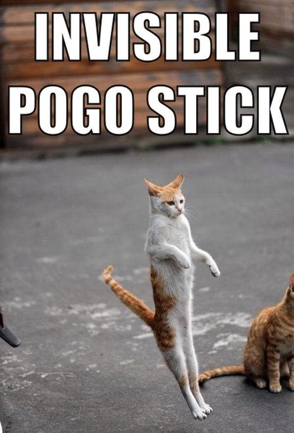 Invisible Pogo Stick - Cat humor
