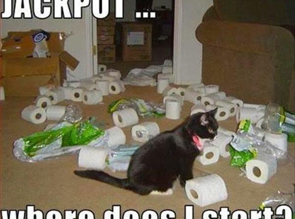 Jackpot - Cat humor