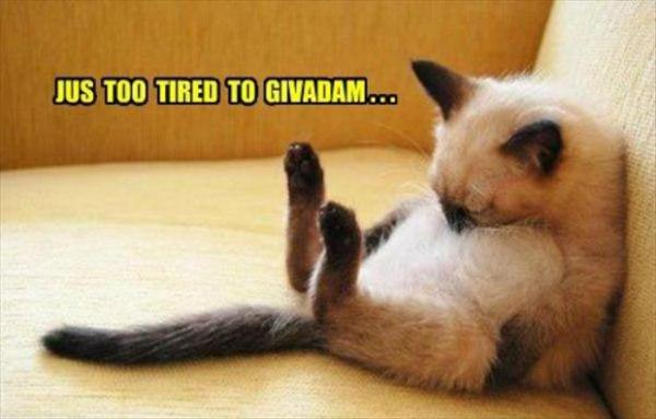 Just To Tired - Cat humor