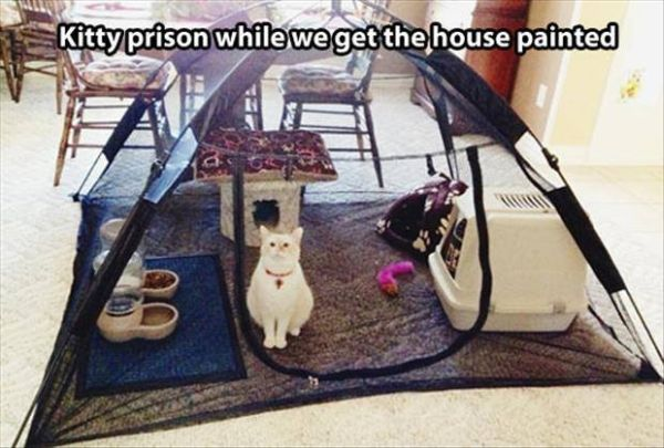 Kitty Prison - Cat humor