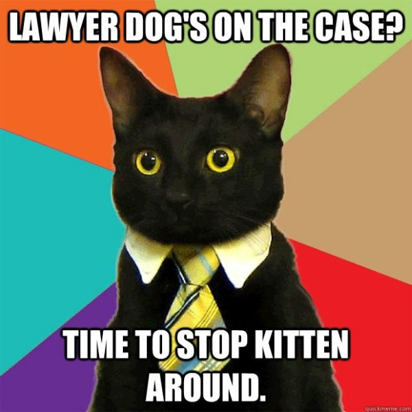 Dog Lawyer On The Case? - Cat humor