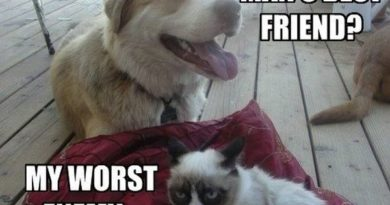 Man's Best Friend - Cat humor