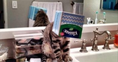 Meanwhile In The Bathroom - Cat humor