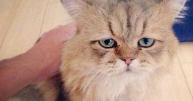 Meet Foo Chan - Cat humor