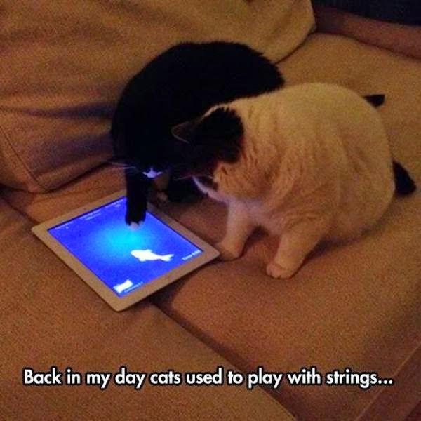 Modern Cats - Cat humor