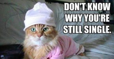I Don't Know Why You're Still Single - Cat humor