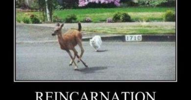 Reincarnation - Cat humor