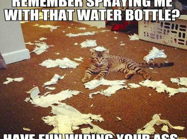 Remember Spraying Me With That Water Bottle? - Cat humor