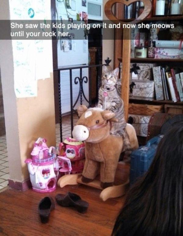 Rock My Pony - Cat humor