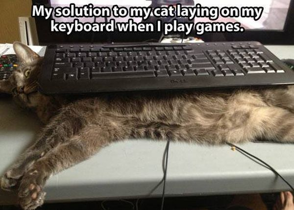 Solution For Gamers - Cat humor