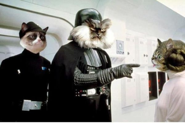 Star Wars Cat Edition - Cat humor