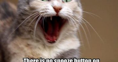 There Is No Snooze Button - Cat humor