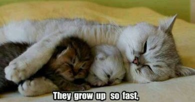 They Grow Up So Fast - Cat humor