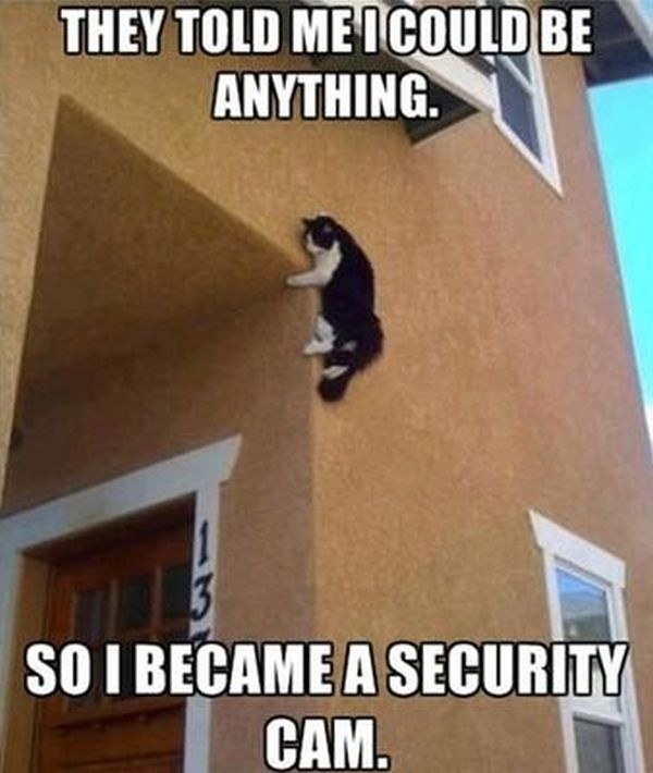 They Told Me I Could Be Anything - Cat humor