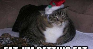 What Am I Getting For Christmas? - Cat humor