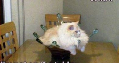 What? - Cat humor