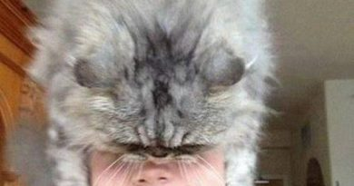 Who Needs A Hat? - Cat humor
