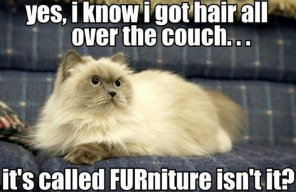 Yes, I Know I Got Hair All Over The Couch - Cat humor