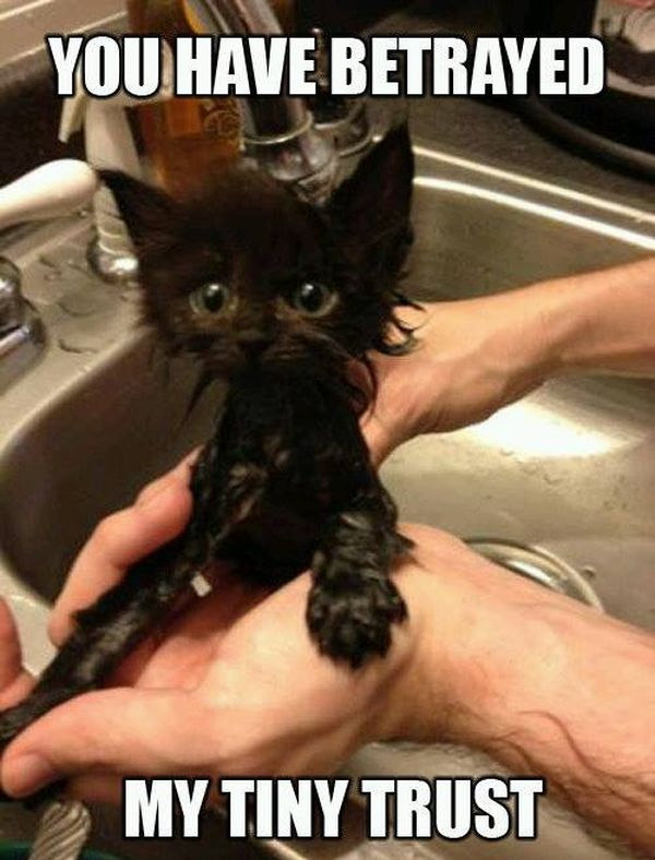 You Have Betrayed Me - Cat humor