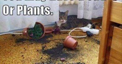 You May Have A Cat Or Plants - Cat humor
