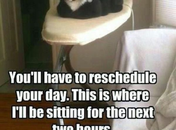 You'll Have To Reschedule Your Day - Cat humor