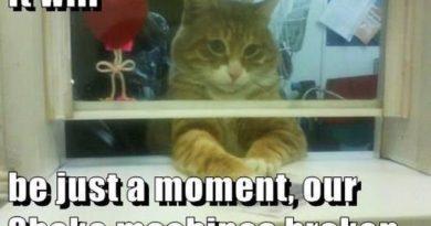 Drive thru Kitty - Cat humor