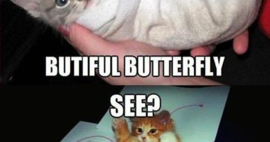 The Butterfly Effect - Cat humor