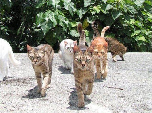 The Cat Gang - Cat humor