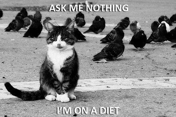 Ask Me Nothing - Cat humor