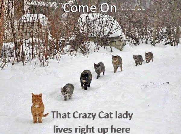 Come On - Cat humor