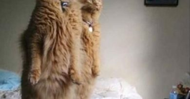 Did You See Our Human? - Cat humor