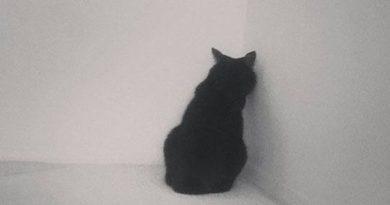 Drama Queen - Cat humor