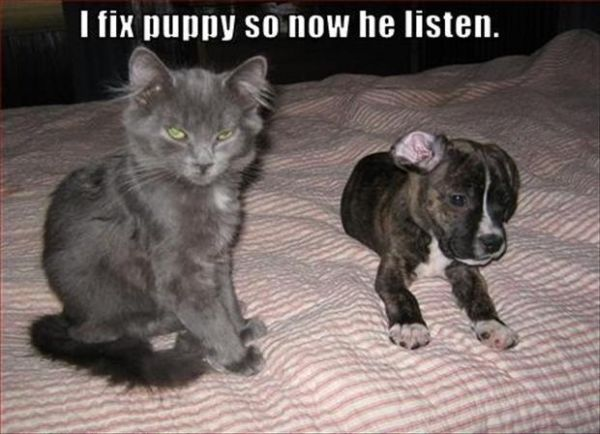 I Fix Puppy - Cat humor