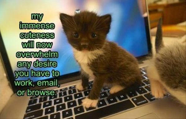 My Immense Cuteness - Cat humor