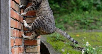Spider-Cat Mom - Cat humor