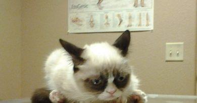 Hey! Doc! - Cat humor