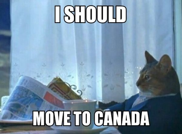 I Should Move To Canada - Cat humor