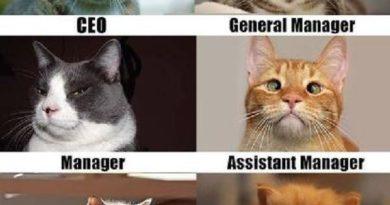 Corporate Cats - Cat humor