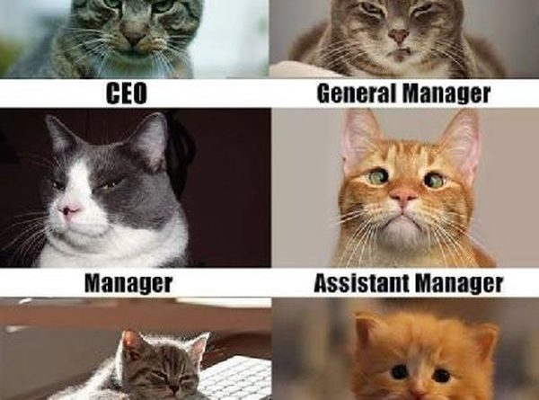 Corporate Cats - Cat humor