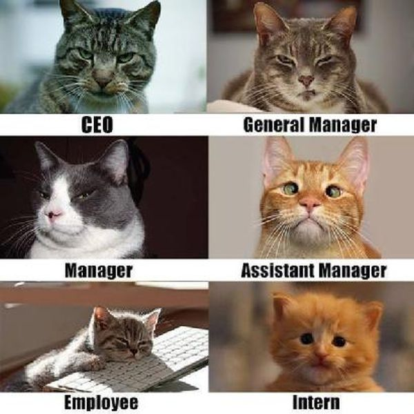 Cat-Humor-Corporate-Cats.jpg