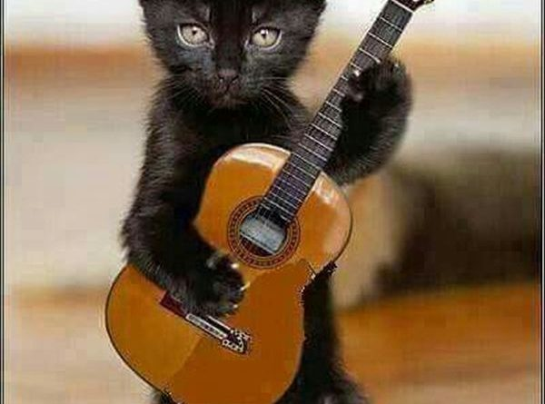 Let Me Play A Song - Cat humor