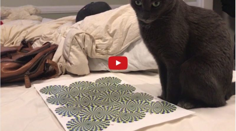 Cat Freaks Out At Optical Illusion